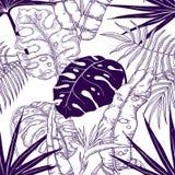 Palma opuszcza bezszwowego wz?r Zasadza rocznik tapetę, kwiecista kreskowa druk tekstura, zwrotnik tkaniny ogrodowy wzór wektor royalty ilustracja