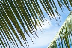Palma opuszcza brać przyjemność słońce i niebieskie niebo Zdjęcia Stock