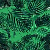 Palma opuszcza sylwetkę na zielonym tle Wektorowy bezszwowy wzór z tropikalnymi roślinami Obraz Stock