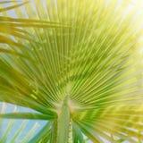 palma opuszcza w świetle słonecznym i być na wakacjach pojęcie - lat tła, wjazd obrazy stock