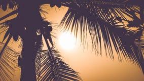 Palma opuszcza w dramatycznym tropikalnym zmierzchu, ciepły colour Obraz Stock