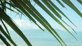 Palma opuszcza z dennym tłem na zamazanej tropikalnej plaży w zwolnionym tempie 1920x1080 zdjęcie wideo