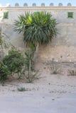 Palma på bakgrundsväggen Royaltyfria Foton