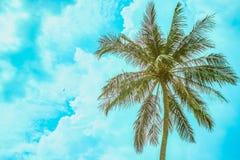 Palma på en bakgrund för molnig himmel royaltyfria foton