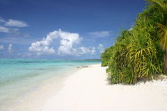 Palma Palme da ilha de Maledives Imagem de Stock