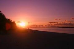 Palma Palme da ilha de Maledives Fotos de Stock Royalty Free