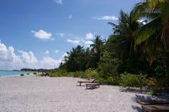 Palma Palme de la isla de Maledives Foto de archivo libre de regalías