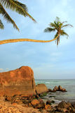 Palma pendente con le grandi rocce, spiaggia di Unawatuna, Sri Lanka Fotografie Stock Libere da Diritti