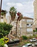 Palma pericolosa alta di rimozione da un camion del secchio Immagine Stock