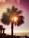 Palma piena di sole Fotografie Stock