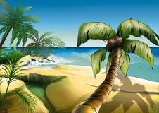 palma plażowa Obrazy Royalty Free