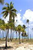 palma plażowa zdjęcie stock