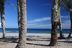palma plażowa Obraz Stock