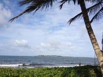 palma plażowa Zdjęcie Royalty Free