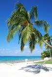 palma pod wakacje Obraz Royalty Free