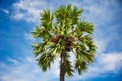 Palma przeciw niebieskiemu niebu obrazy stock