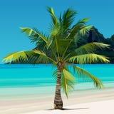 Palma que cresce na costa tropical com água azul Fotografia de Stock