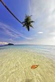 Palma que cuelga sobre el mar Imagen de archivo libre de regalías