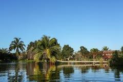 A palma que pendura sobre a superfície de um lago Imagens de Stock Royalty Free