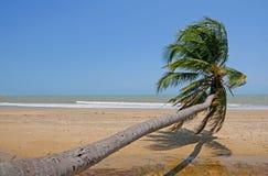 Palma que se inclina en la playa Imagenes de archivo