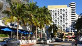 Palma real 4k de Miami Beach almacen de video