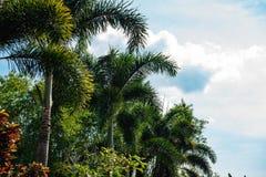Palma rozgałęzia się przeciw niebieskiemu niebu Obrazy Stock