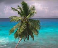 palma samotna Obrazy Stock