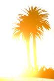 Palma in siluetta Immagine Stock Libera da Diritti