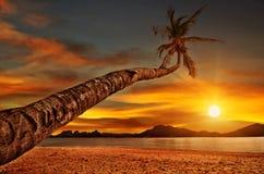 Palma sobre el mar de la puesta del sol Imágenes de archivo libres de regalías