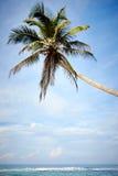 Palma sobre el océano Imagen de archivo libre de regalías