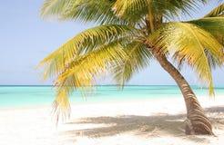 Palma sola davanti all'Oceano Indiano maldives Fotografia Stock Libera da Diritti