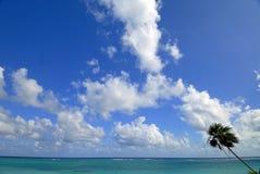 Palma solitária Imagens de Stock