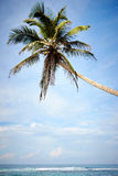 Palma sopra l'oceano Immagine Stock Libera da Diritti
