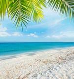 Palma sopra una spiaggia tropicale fotografia stock
