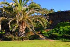Palma in sosta Fotografia Stock
