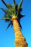 Palma sotto cielo blu Immagini Stock Libere da Diritti