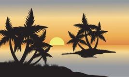 Palma in spiaggia al tramonto Fotografia Stock