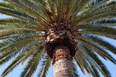 Palma in spiaggia di Hermosa Fotografie Stock