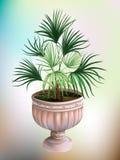 Palma in a stone vase. Vector Illustration Royalty Free Stock Photo