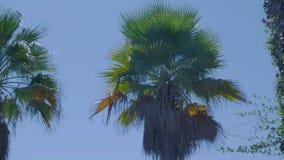 Palma su cielo blu archivi video