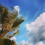 Palma su cielo blu Fotografia Stock