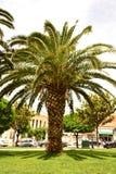 Palma su erba verde Immagini Stock Libere da Diritti
