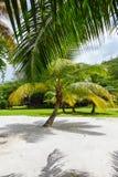 Palma su una sabbia bianca tropicale Seychelles Fotografia Stock Libera da Diritti