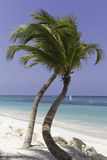 Bella spiaggia con la palma Fotografia Stock Libera da Diritti