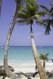 Bella spiaggia con la palma Immagini Stock Libere da Diritti
