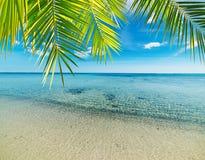 Palma su una spiaggia tropicale fotografia stock