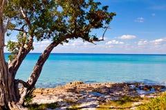 Palma sul bello Playa Giron, Cuba Fotografia Stock