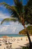 Palma sul litorale dell'oceano fotografia stock