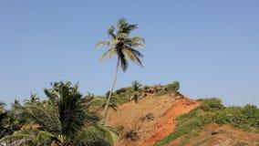 Palma sul pendio di collina contro un cielo blu pulito stock footage