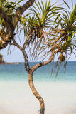 Palma sull'isola di Phu Quoc Fotografia Stock